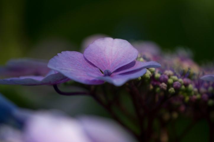 flowers-0338